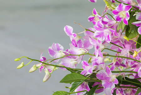 looked: Purple and white orchid looked refreshing.