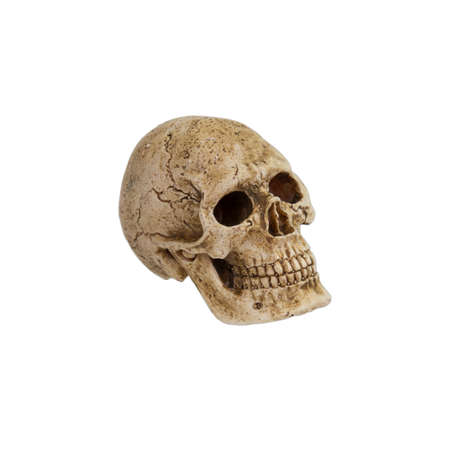 A human skull on a white background.