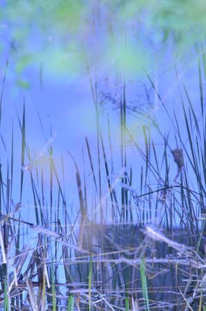 reflection water: sorgente di acqua riflessione Archivio Fotografico