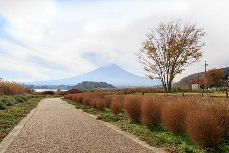 Road to Mount Fuji along with green park, Lake Kawaguchiko, Japan