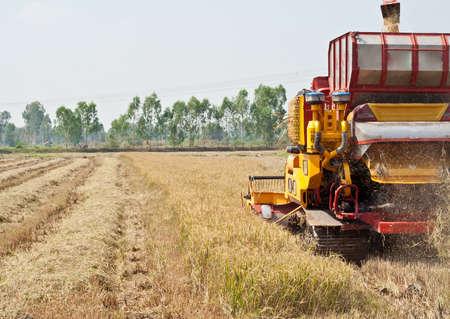 maquinaria: El segador siega en los campos y los cultivos est�n maduros