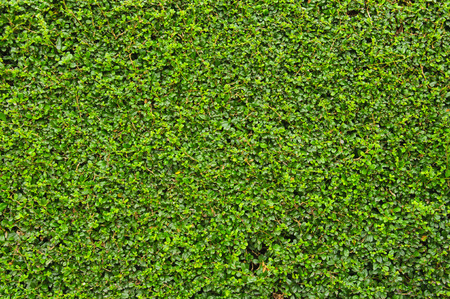 Green plant background at Khao Yai in Thailand Stock Photo