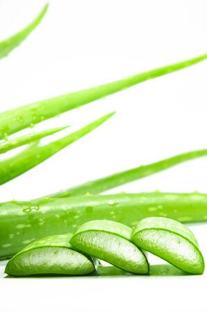 plants species: Aloe � un genere che contiene oltre 500 specie di piante succulente. Archivio Fotografico