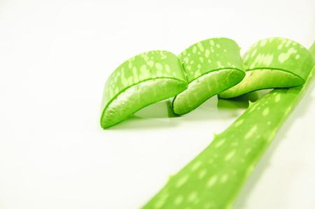 plants species: Aloe � un genere che contiene pi� di cinquecento specie di piante succulente.