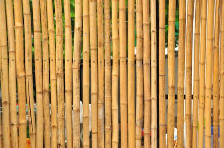 widely: bamboo, a giant woody grass that grows chiefly in the tropics, where it is widely cultivated. Stock Photo