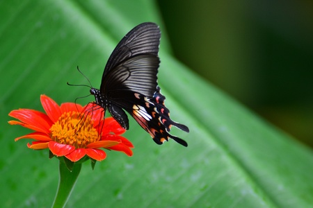 butterfly and flower2 photo