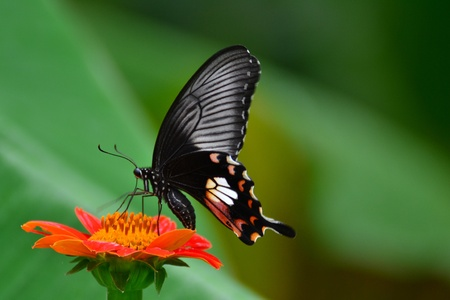 butterfly and flower1 photo