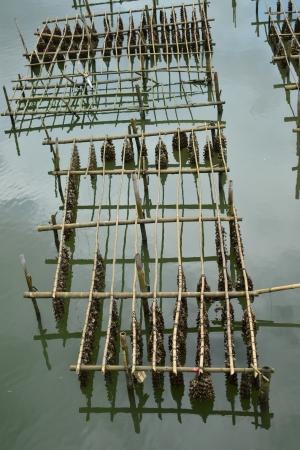 The way of life of fisherman village,Chanthaburi Province,Thailand,Asia. photo