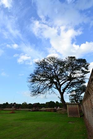 tree and blue sky photo