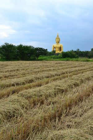 Rice feild in front of Statue of sitting buddha at Thai temple,Angthong Province,Thailand,Asia Stock Photo