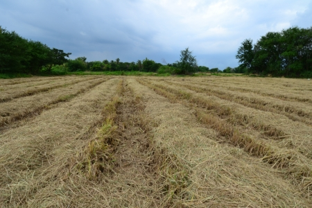 Field after harvest,Angthong Province,Thailand photo