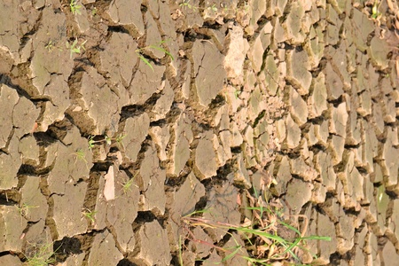 Texture of a drying ground. Stock Photo - 18365464