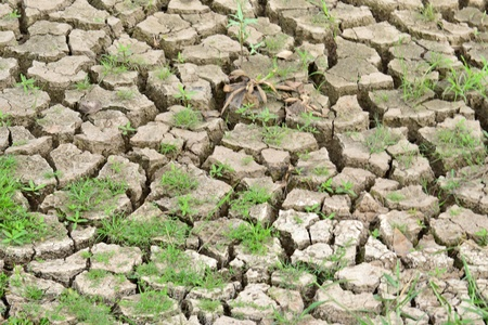 Texture of a drying ground. Stock Photo - 18365469