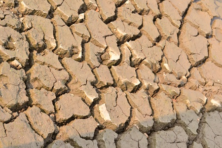 Texture of a drying ground. Stock Photo - 18365467