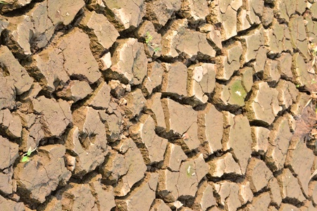Texture of a drying ground. Stock Photo - 18365465
