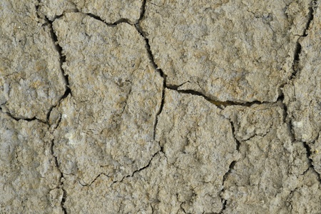 Texture of a drying ground. Stock Photo - 18365500
