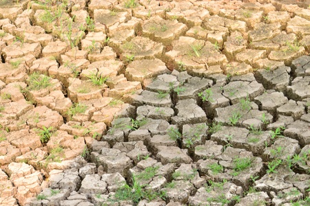 Texture of a drying ground. Stock Photo - 18365470
