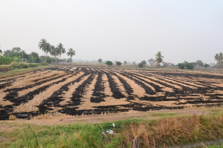 Burned fields for plants  in Thailand. photo