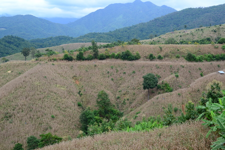 The deforestation in Thailand. photo