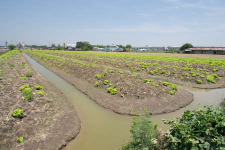 nontaburi: vegetable plot and the area that to prepared  for planting vegetable crops at Nontaburi province, Thailand. Stock Photo
