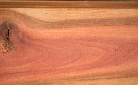 duramen: Los colores brillantes del duramen de Tailandia tropical. Foto de archivo