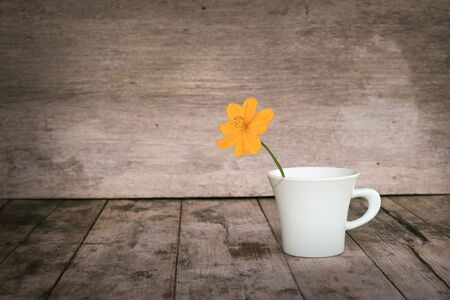 florae: flower in cup with wood background.