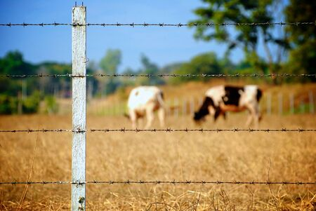 Cow fence photo