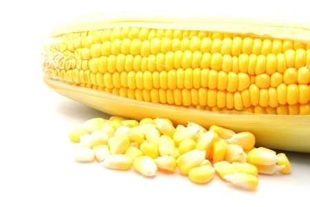 corn yellow: El ma�z amarillo Foto de archivo