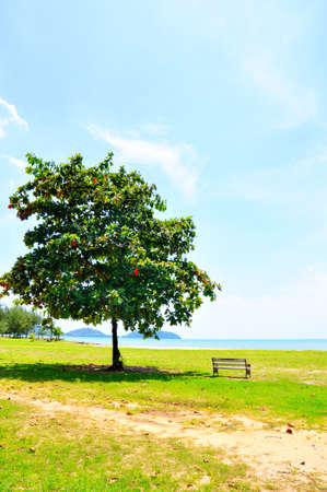 lullaby: Tree with chair on the beach at saparnhin, phuket, thailand