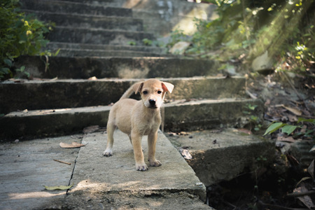 Puppy standing at ancient place