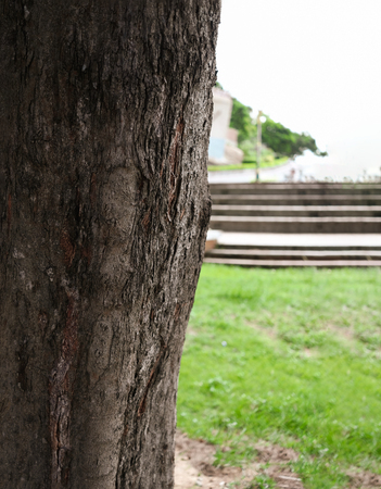 Hard wood tree and courtyard background on nice day. Selective focus Imagens