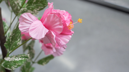 Artificial pink flower with walkway background. Selective focus