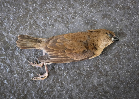 Fallen bird on dark concrete floor background