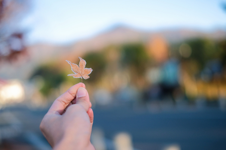 Hand picking frozen maple leaf in autumn season Imagens - 123863010