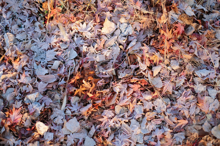 Frozen dry leaves background in autumn season Imagens - 123863035