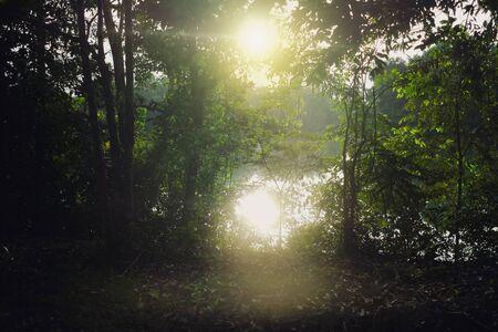 Hintergrundbeleuchtung in der Natur vor Sonnenuntergang im Wald in der Nähe des Flusses
