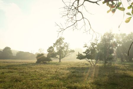 Beautiful landscape view background in the morning with nobody