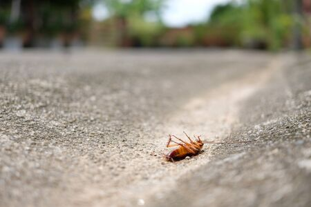 Close up dead body of cockroach on concrete street side with turning face up Banco de Imagens