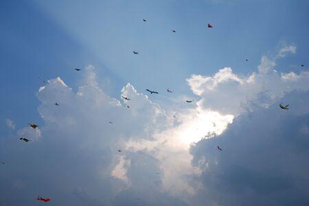flock of kites