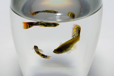 fish in a glass Stock Photo
