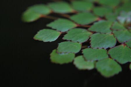 floating plant Stock Photo