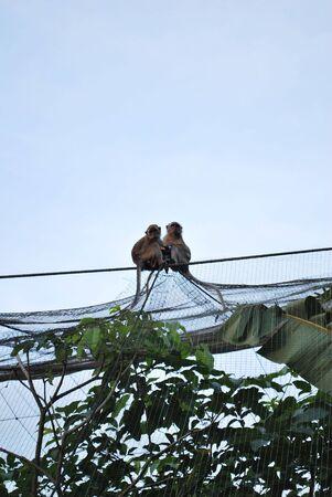 sweet couples Stock Photo