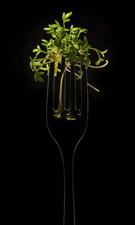 The Fork with Sprig of Cress on Black Background