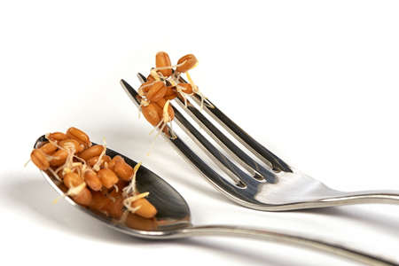 sprouted: Fork and Spoon with Sprouted Wheat on a White Background
