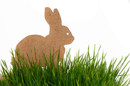 joyfulness: easter bunny in green grass