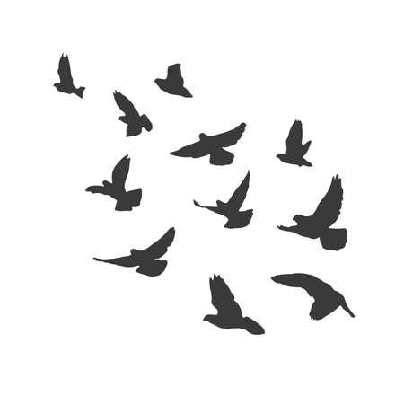 drift: Silhouette flying birds on white background. Pigeons fly. Illustration