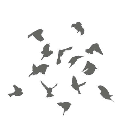 A flock of sparrows takes off, the silhouettes. Vector illustration.