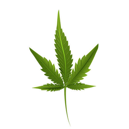 Leaf of marijuana isolated on white. Graphic design element for print, web, print, t-shirt.