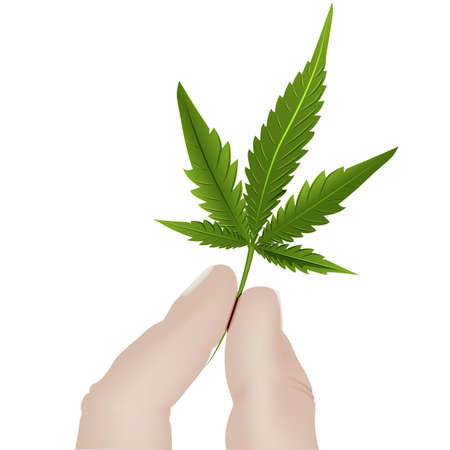 Two fingers of a hand holding Lis cannabis on a white background.