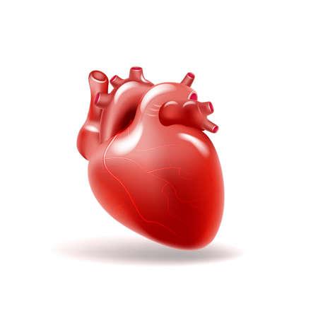 Menselijk hart. Geneeskunde, inwendige organen 3D-vector Vector Illustratie